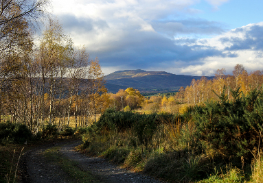 Royal-Deeside-Holiday-Cottages-North-East-Scotland-Clearfield-Family-Cottage-Mobile-Image-7